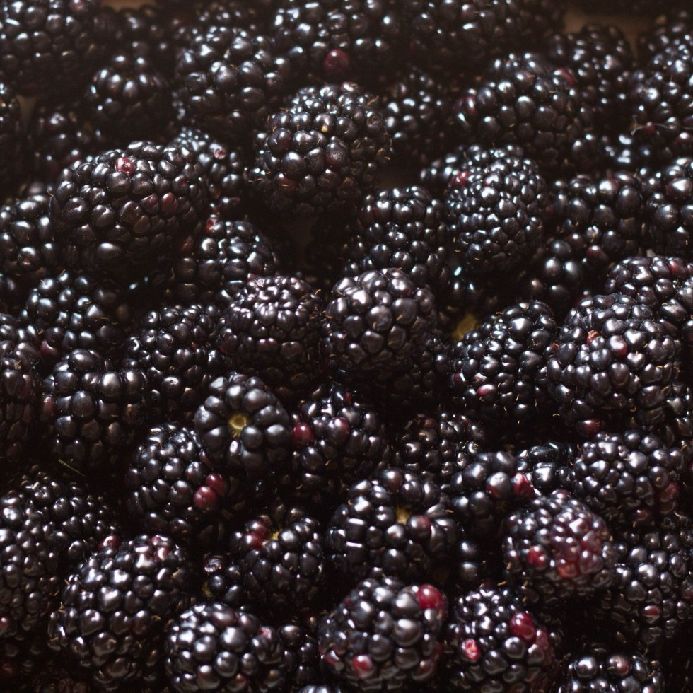 Blackberries, TowniesWS.com