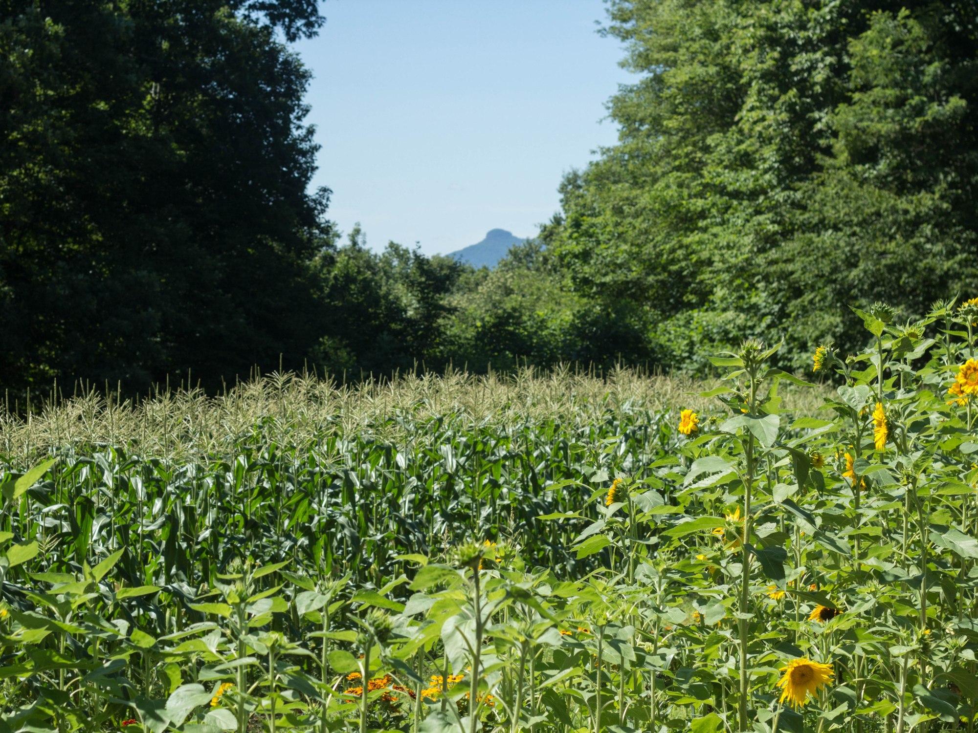 Minglewood Farm and Preserve, TowniesWS.com