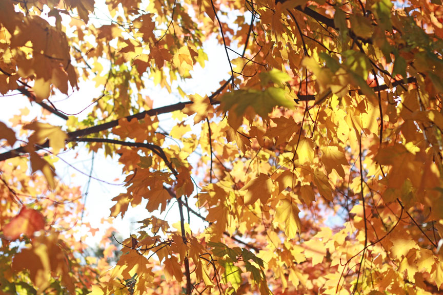 Autumn in Old Salem