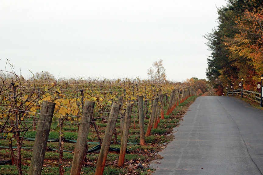 yadkin valley vineyards, TowniesWS.com