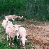 (c) Winstead Farm