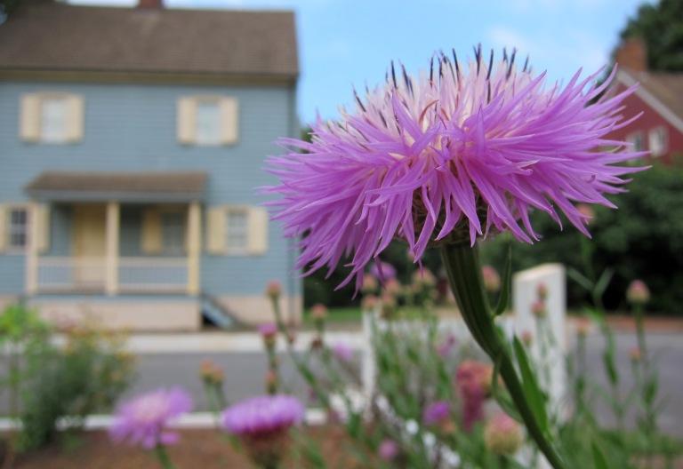 Basket Flower (2)
